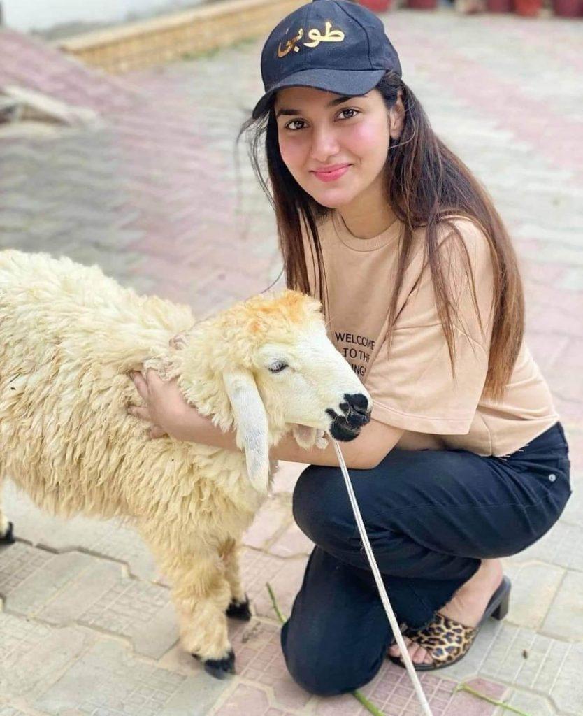 TV stars and their Sacrificial Animals